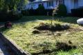 plantings-005