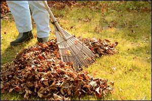 Autumn Planting Tips Rhode Island