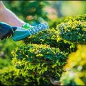 Top Commercial Landscaping Services in Northern Rhode Island