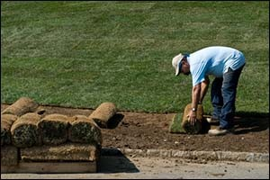 Sod vs Seed for Rhode Island lawns