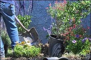 landscaping spring cleaning in Rhode Island