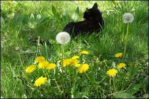 Get Rid of Summertime Weeds