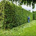 Summer Landscaping in Rhode Island for Commercial Properties