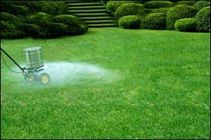 Fertilizing and Weeding - Lawn Care