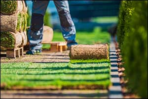 winter and spring lawn care in rhode island